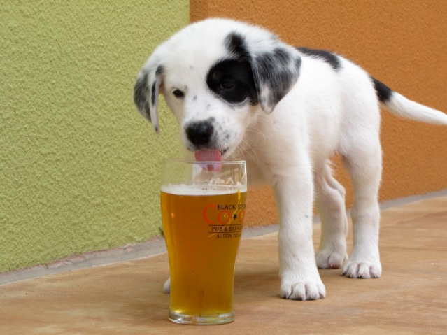 This is a beer dog, you are writing a beer BLOG. Don't ever get the two mixed up.